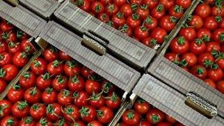 Daha 7 müəssisədən Rusiyaya pomidor ixracına icazə verildi - SİYAHI