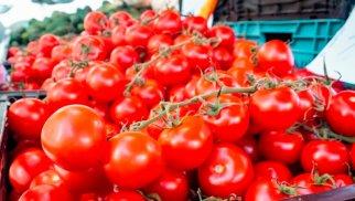 Daha 7 sahibkara Rusiyaya pomidor ixracına icazə verildi