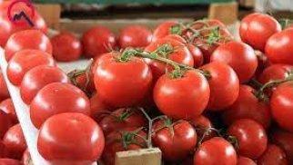 İspaniyadan Azərbaycana gətirilən pomidor toxumunda virus aşkarlanıb