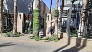 Sumqayıtda ağacların gövdəsi süni örtükdən təmizlənib - FOTO
