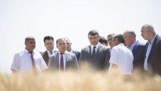 Qobustanda fermerlərə yeni taxıl sortları nümayiş olunub - FOTO
