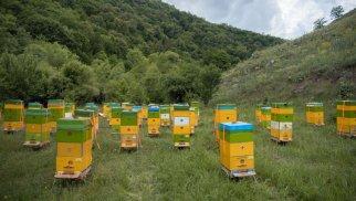 Kəlbəcər yaylaqlarına daha 2500 arı ailəsinin köçürülməsinə başlanıldı -FOTOLAR