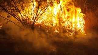 Meşə yanğınları ilə bağlı çağırış: Büdcəyə külli miqdarda ziyan dəyir