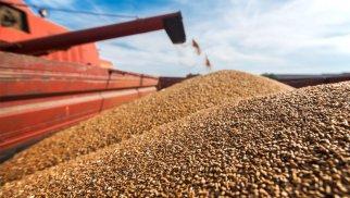 Qlobal buğda qiymətləri niyə bahalaşıb? – FAO səbəbini açıqladı